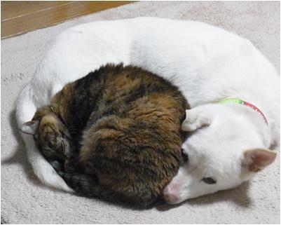 page犬猫団子