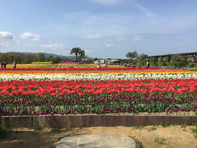 page公園