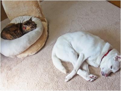pageyukiとkoma寝姿