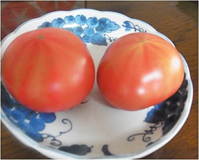pageトマトお皿