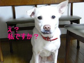 RIMG2210yukiえ?