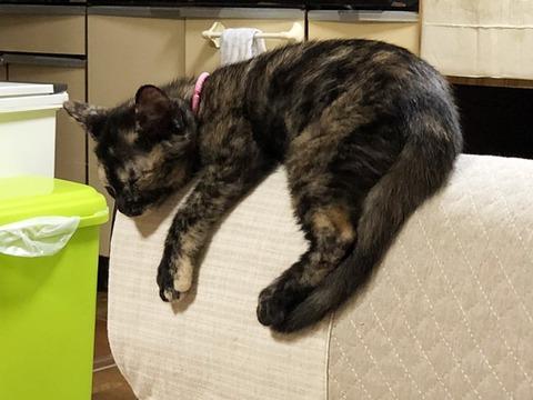 ココア寝落ち