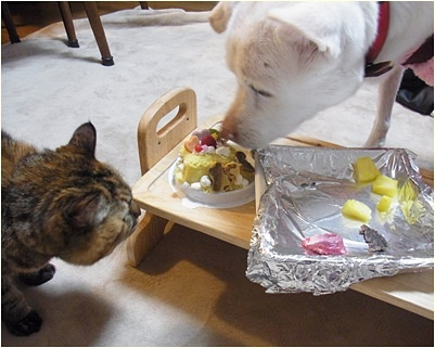 pageケーキにぱくつく
