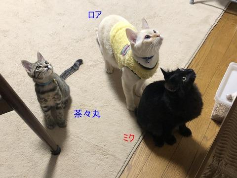 3人さん、
