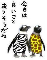 ペンギンゼブラ
