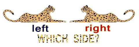 which side of a leopard