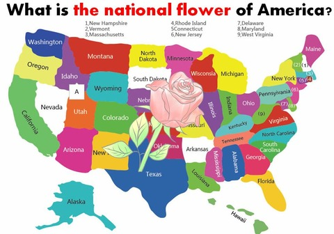 National Flower of USA