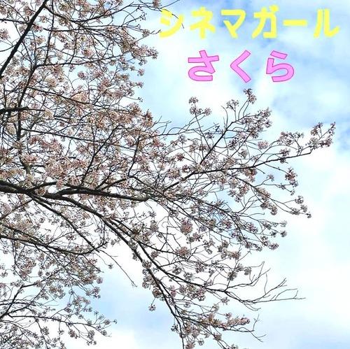 Cinema_girl_sakura