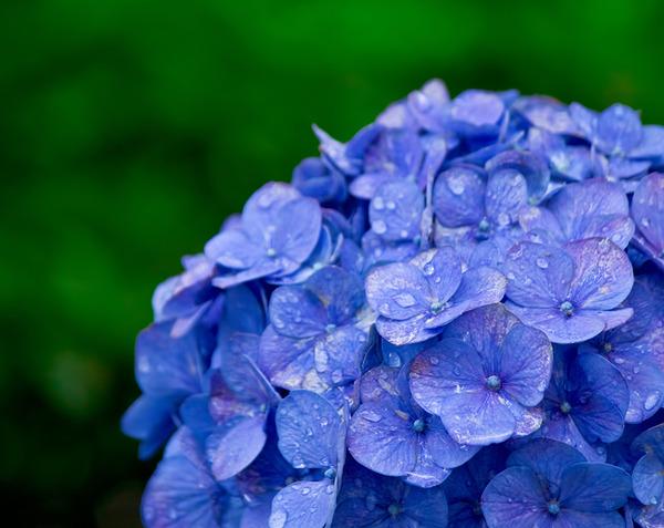 田舎者「雨の匂いする!」←これwwwww