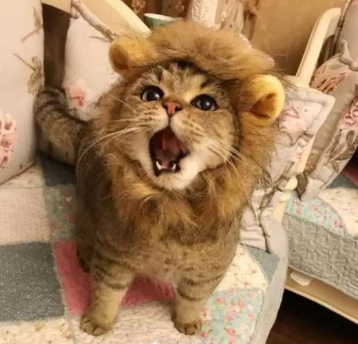 【悲報】ライオンさん、鳴いただけで通報される…