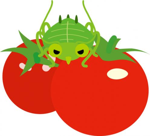 tomato-aburamushi-530x481