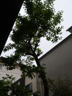 http://livedoor.blogimg.jp/pawarai2/imgs/f/6/f6b4b451.jpg