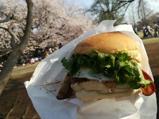 新宿御苑の桜4