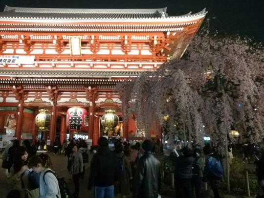 夜の浅草寺しだれ桜