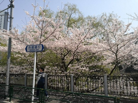 市ヶ谷駅~外堀の桜