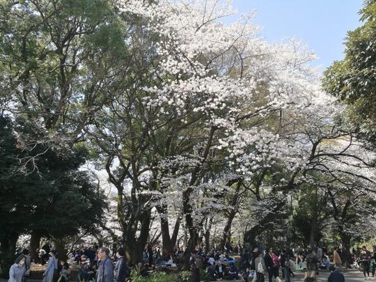 上野公園 花見の様子2