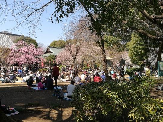 上野公園 花見の様子