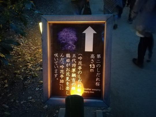 六義園第二のしだれ桜