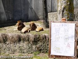 asa_zoo-230