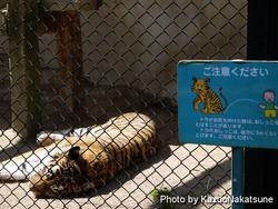 asa_zoo-229