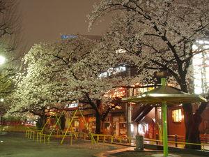 思い出の桜