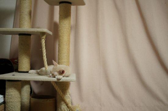 カメレオン猫・ジル