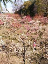 大阪城梅園 (5)