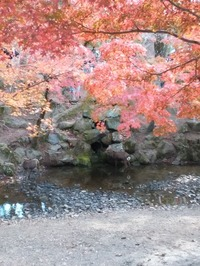 奈良公園 (2)