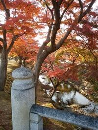 奈良公園 (1)