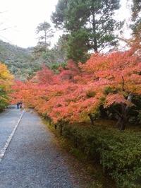 2017嵐山 (39)