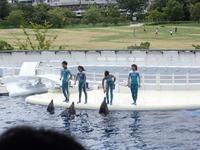 京都水族館 (4)