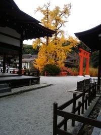 下賀茂神社のイチョウ