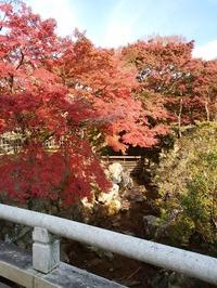 奈良公園 (3)