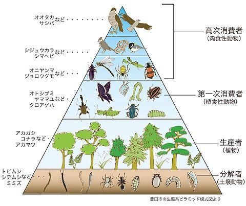 seitaikeipyramid
