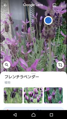 Screenshot_20200515-164535
