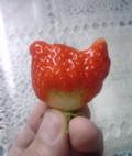 いちごkitty2