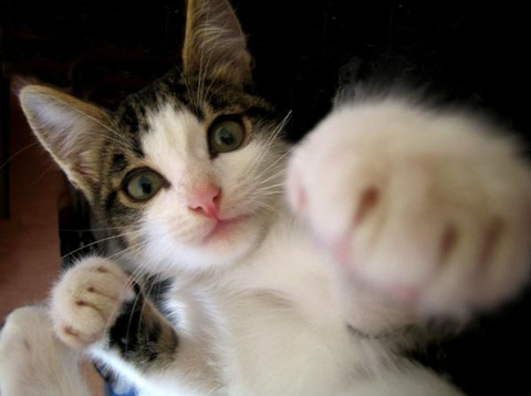 猫パンチ_猫ねこch