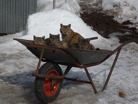 車_猫ねこch