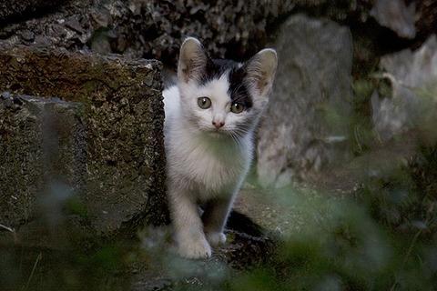 ノラ猫_子猫_猫ねこch