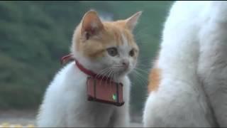 見習い_猫ねこch