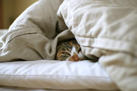 布団で寝る猫_猫ねこch