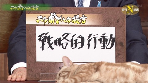 TV6_猫ねこch