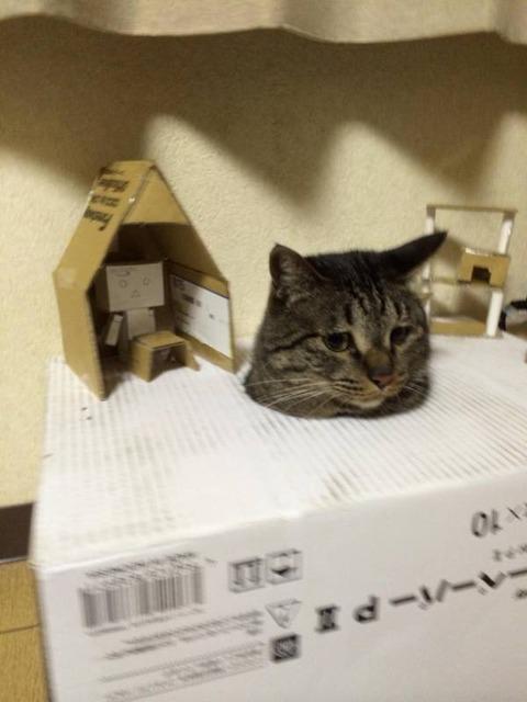 箱20_猫ねこch
