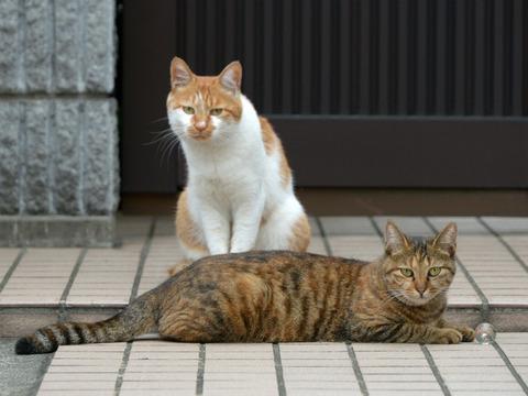 2匹06_猫ねこch