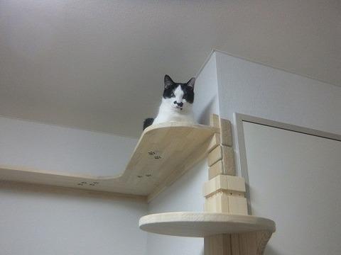 猫つきマンション10_猫ねこch