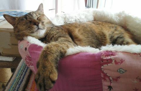 寝転んだ12_猫ねこch