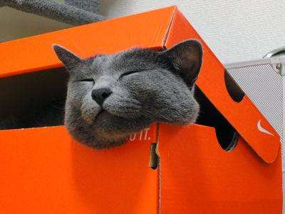 箱13_猫ねこch