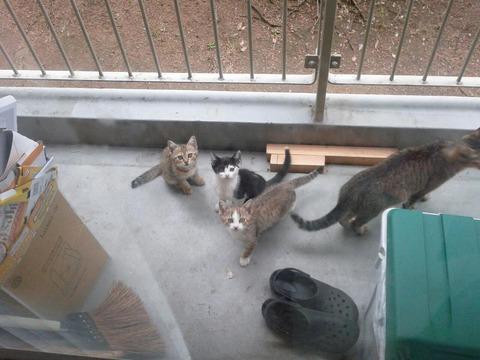 引越し08_猫ねこch