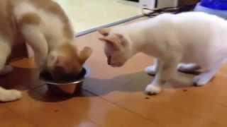 譲り合い_猫ねこch
