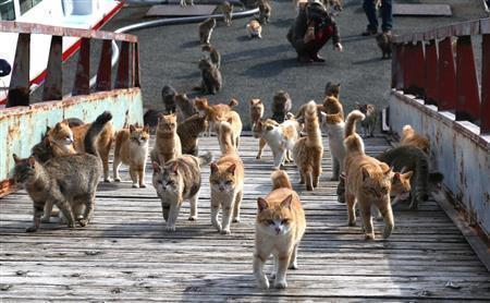 猫島04_猫ねこch